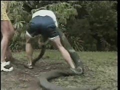 Hungarian Honey Attacks A Big Trouser Snake