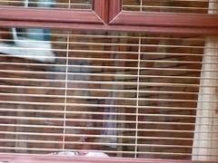 neighbour voyeured 3