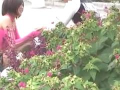 Exotic Japanese model Nana Saeki in Amazing Public, Softcore JAV video