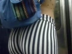 Calza cebra (1)