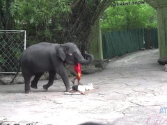Moka Mora in Moka Is Having The Best Time Feeding Animals - ATKGirlfriends